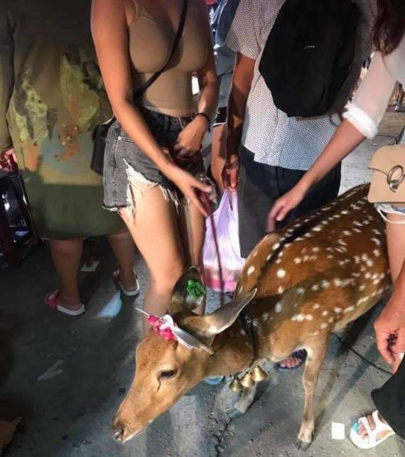 原PO貼出有2位女子正在撫摸乖巧的梅花鹿,但網友卻聚焦的是後方女子的火辣身材。(圖擷自PTT)
