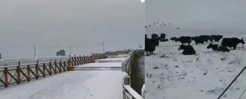 中國甘肅甘南藏族自治州碌曲、瑪曲縣一夜降雪,盛夏變嚴冬。(圖截自Twitter影片)