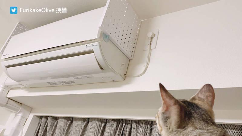 發現路徑後飼主做了冷氣防護,兩幼貓難掩失望。(圖片由Twitter帳號FurikakeOlive授權提供使用)