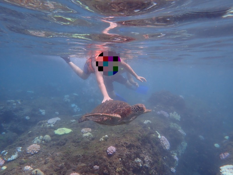 小琉球再度發生小朋友觸摸海龜的不當行為。(記者葉永騫翻攝)