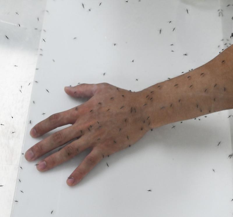 蚊子被認為是世界上最危險的生物之一。(法新社)