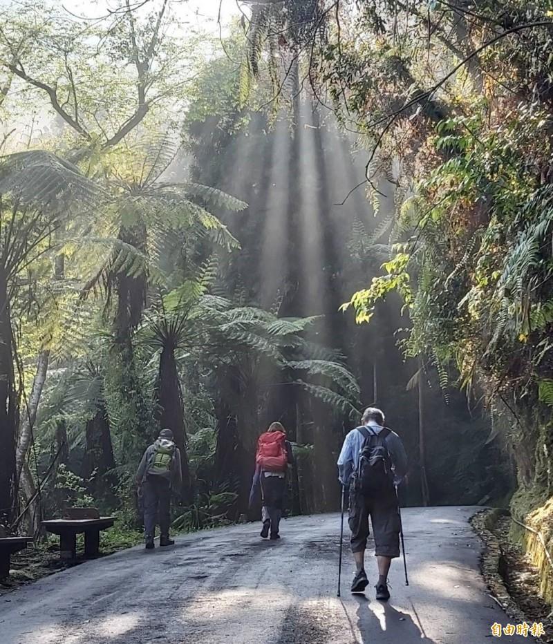 溪頭自然教育園區步道規劃完善,是民眾享受森林浴最佳去處。(資料照,記者張協昇攝)