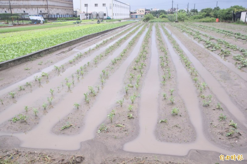 高雄連日豪大雨,梓官蔬菜專區部分菜園出現積水災損。(記者蘇福男攝)