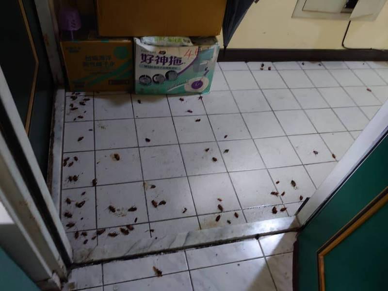 有民眾打開家門就看見隔壁「蟑螂養殖戶」產生的大量蟑螂,感到相當不舒服。(圖取自爆料公社)