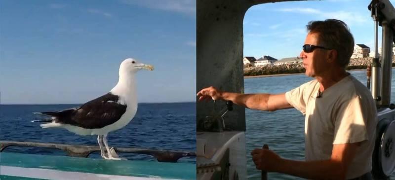 馬科夫斯基(John Makowksy)自從救過海鷗「紅眼」後,每次出海時「紅眼」都會飛過來陪他,一人一鳥相伴已有15年。(圖翻攝自Twitter影片)