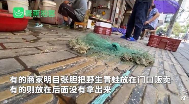 有中國民眾拍下相關畫面,只見攤販用綠色網袋裝入活跳跳的青蛙,並直接丟在路邊,還伴隨著水漬與垃圾,現場環境髒亂又噁心。(圖擷取自微博)