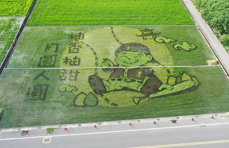 苗縣苑裡鎮農會今年稻田彩繪主題為「柚香柚甜,月圓人圓」,展現中秋佳節意境。(記者張勳騰翻攝)
