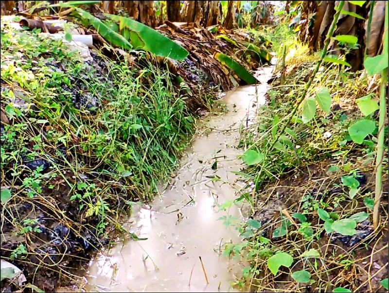 棕色強鹼性的污染水流入鄰近芭蕉園的溝渠,居民擔心污染農地。 (記者許麗娟翻攝)