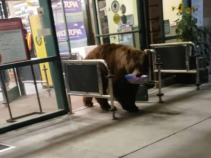 美國加州太浩湖附近有民眾目擊到1隻大棕熊悠哉「逛超市」。(圖翻攝自Twitter)