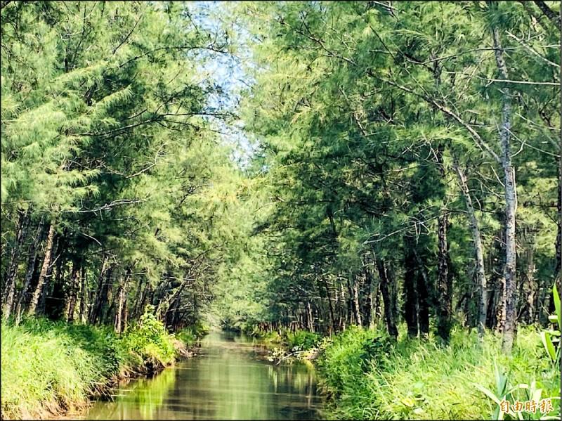 1920號好美保安林造林逾12公頃,林相蓊鬱新秘境。(記者蔡宗勳攝)