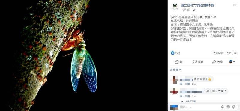 國立台灣大學昆蟲標本館於今年7月舉辦「2020小學生昆蟲生態攝影比賽」,近日結果揭曉,得獎作品美麗又專業,驚艷不少民眾。(圖擷自國立臺灣大學昆蟲標本館臉書)