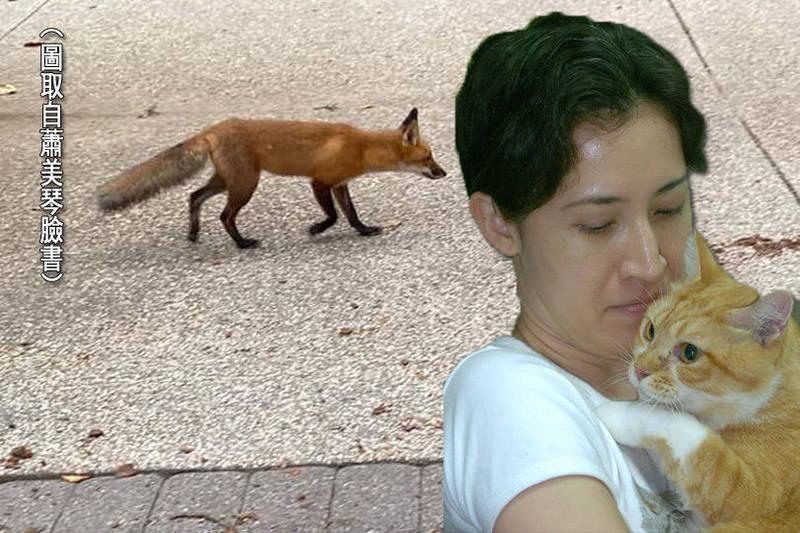 駐美代表蕭美琴常常在推特替台灣發聲,也在臉書分享相關消息,或發文和台灣朋友互動。蕭美琴PO文指出,她目睹一隻狐狸經過宿舍門口,下定決心不讓貓出門了。背圖取自蕭美琴臉書。(本報合成)