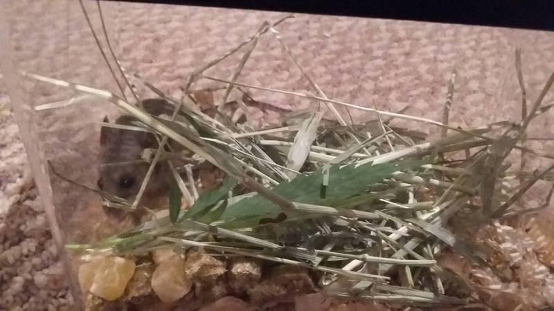 蘇利文弄來一個小窩,準備幫小老鼠「戒毒」邁向新鼠生。(圖擷取自Colin Sullivan臉書)
