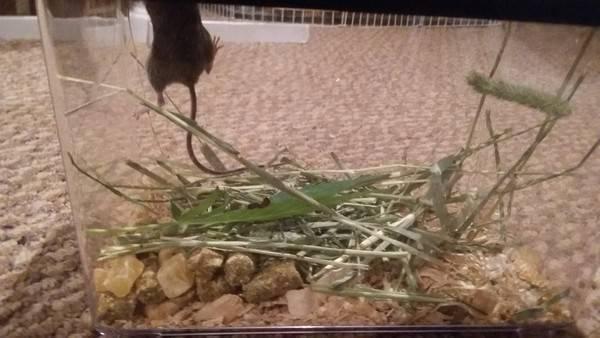 小老鼠戒毒期間還想偷跑。(圖擷取自Colin Sullivan臉書)