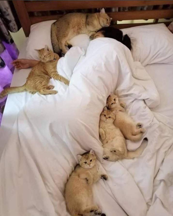 熟睡中的女子被5隻喵星人團團包圍。(圖擷自爆廢公社)