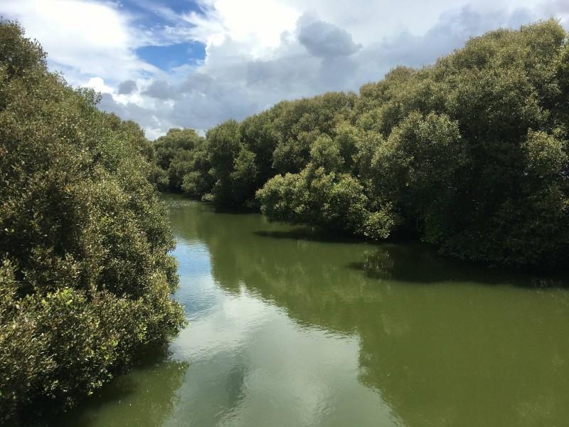 台南市南區部分紅樹林族群及濕地環境長期缺乏關注,現在更面臨都市開發威脅生態,呼籲市府盡速採取保育行動。(記者王姝琇翻攝)