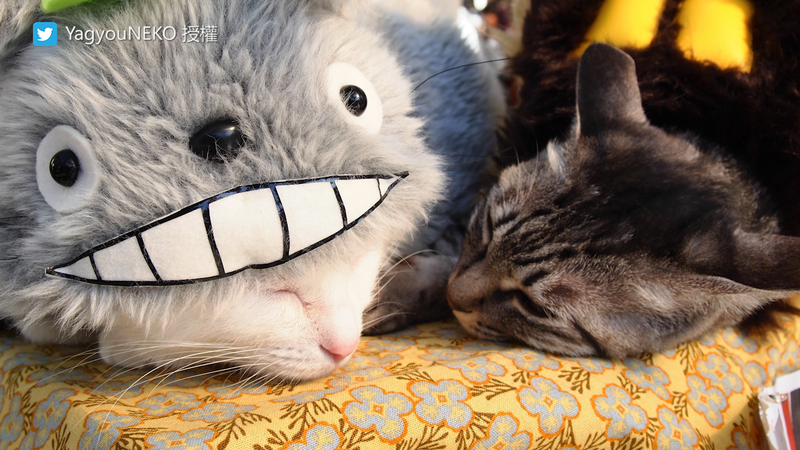 飼主縫製的衣服,讓兩隻貓舒服到可以穿著睡覺。(圖片由Twitter帳號YagyouNEKO授權提供使用)