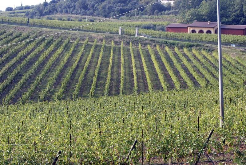 義大利葡萄酒因疫情衝擊,傳統銷售管道大受影響,業者轉戰網路,希望另闢生路。(美聯社)