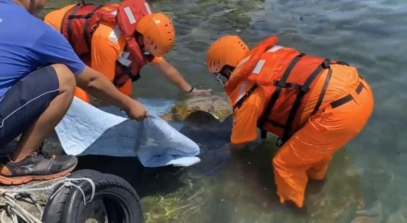 海巡人員搶救無法下潛的綠蠵龜。(記者陳彥廷翻攝)