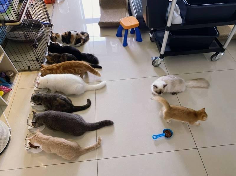 館長外表強硬慓悍,不過私下卻有一顆溫柔的心,過去他曾PO文顯示在家中養了不少隻貓。(取自飆捍臉書)