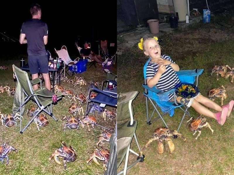 在澳洲西部耶誕島生活的盧蒂克一家人,近日舉辦燒烤趴,找來島上遊客同樂,正準備大快朵頤時,附近竟出現數十隻巨大的「椰子蟹」聞香而來,團團包圍著眾人。(圖擷取自Christmas Island Tourism臉書)