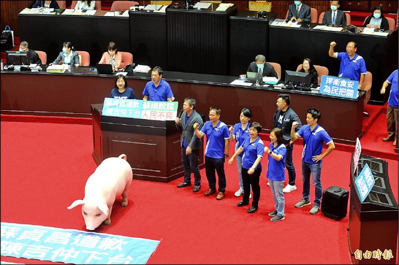 立法院邀請行政院長蘇貞昌專案報告開放含瘦肉精美豬政策,國民黨霸佔議場,要求蘇貞昌先道歉再報告。(記者王藝菘攝)