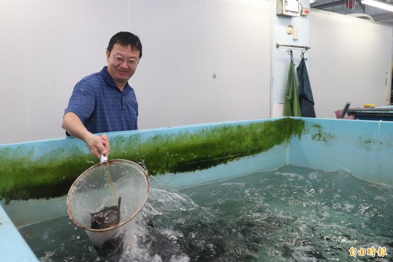 中央研究院臨海研究站研究院陳志毅,發現石斑魚身上提煉出來的抗菌肽,能治療燒燙傷。(記者林敬倫攝)