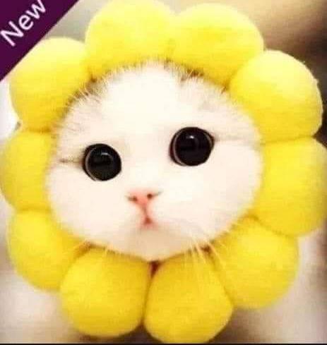 商品照是隻可愛的大眼萌貓。(圖擷自爆笑2公社)