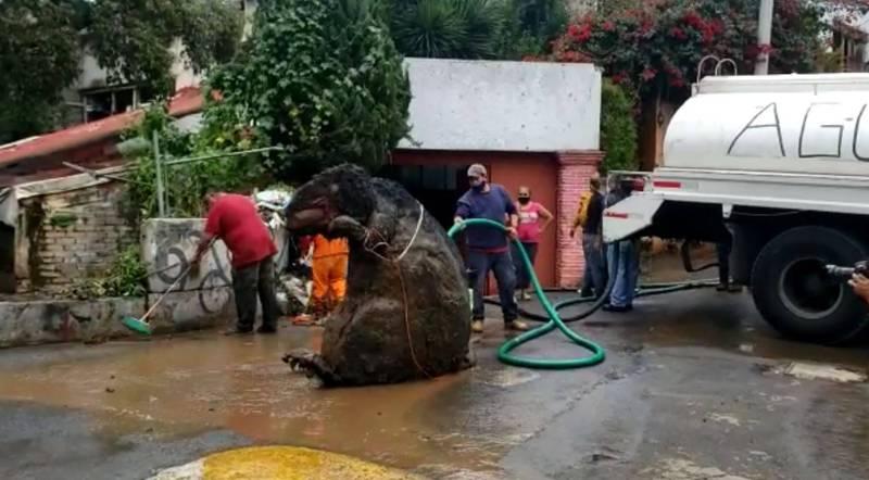 嚇死人!墨西哥近日因大雨緣故,多處下水道淹水,也累積不少垃圾。清潔隊日前在清理下水道時,意外清出一隻栩栩如生的「巨大老鼠」,嚇壞不少民眾,後來才知道這是一隻萬聖節道具玩偶,主人也已經將它領回。(擷取自 Enrique Serna臉書)