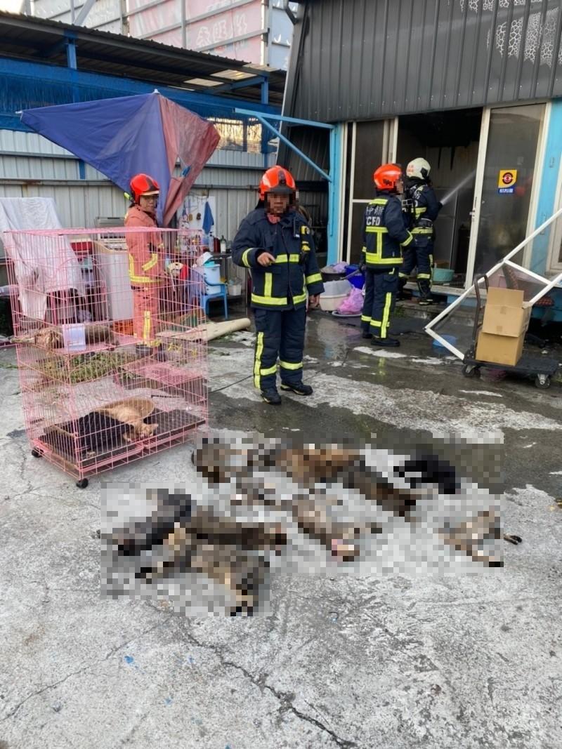 消防人員進入廠內查看,意外發現14隻已經昏迷的貓,立即將牠們搬運到戶外。(記者何宗翰翻攝)