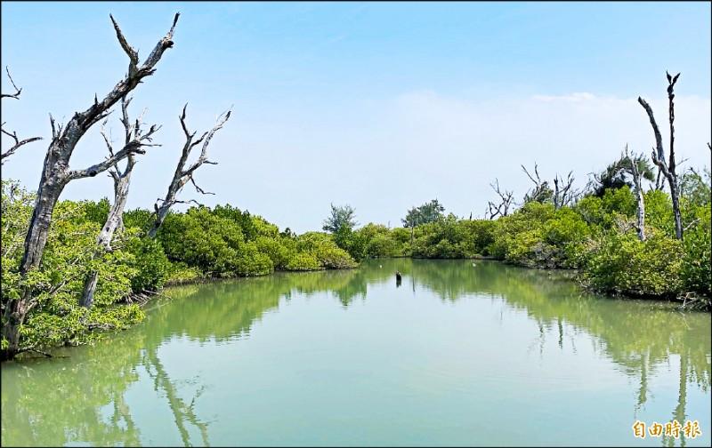 雙春遊憩區的紅樹林、保安林生態豐富,景觀美。 (記者楊金城攝)