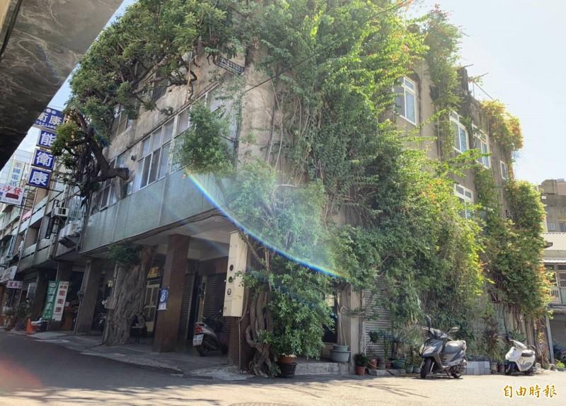 彰化市中華西路陸橋旁一棟3樓透天厝,1棵百年老榕樹包覆著整棟房子,粗大樹幹也穿越廁所,形成「樹中有屋、屋中有樹」奇景。 (記者湯世名攝)