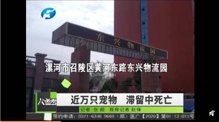 中國東興物流園出大包,近萬隻寵物受困包裹中死亡。(圖擷取自微博)