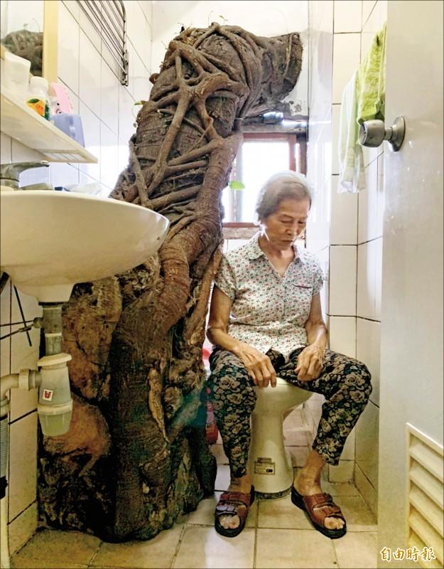 與大榕樹相伴40多年,屋主黃宿表示,看到這棵樹是丈夫留給她最美好的回憶。(記者湯世名攝)