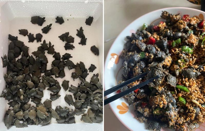 有網友上網發文分享「蒜香椒鹽小鱉」食譜,引起廣大網友熱議,好奇口感如何。(圖擷取自臉書_廚藝公社;本報合成)