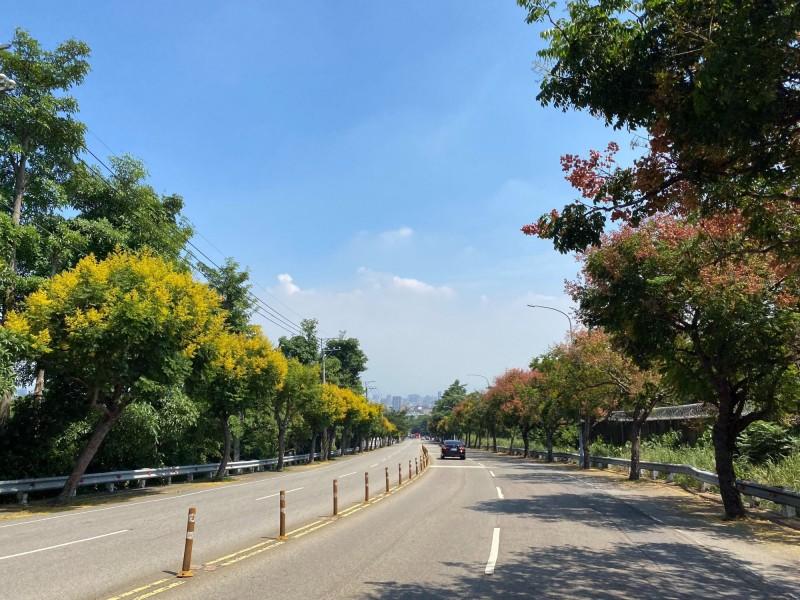 道路兩旁台灣欒樹入秋後黃花綻放,結果時又轉為紅褐色,很是美麗。(記者蔡淑媛翻攝)