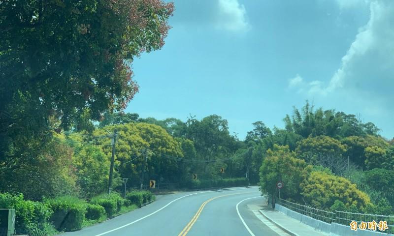139線台灣欒樹呈現黃紅綠交錯,色彩繽紛超浪漫。(記者湯世名攝)