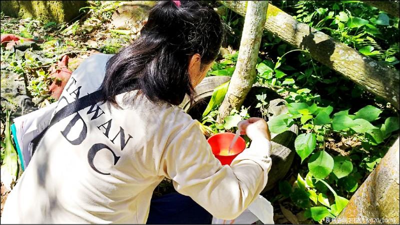 新北市三峽區五寮里菜園的登革熱群聚感染再增8例,防疫人員持續加強高風險區域之孳生源查核。 (疾病管制署提供)
