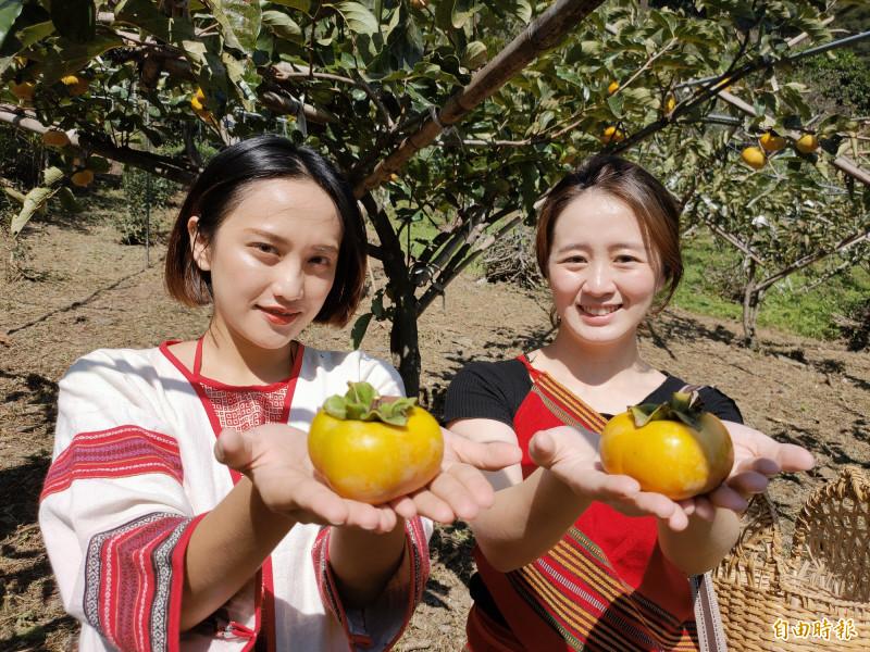 仁愛鄉高山甜柿口感脆、甜度佳,是秋季重要經濟作物。(記者佟振國攝)