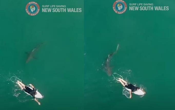 威爾金森當時正在伏臥在浪板上划水前進,沒想到一條大白鯊迅速游近並準備發動攻擊。(本報合成照,擷取自YT)
