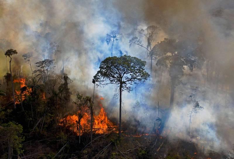 科學期刊《自然通訊》最新研究警告,因為氣候變遷和濫伐開發,4成亞馬遜森林恐「永遠」變成莾原,已瀕臨臨界點。(法新社)