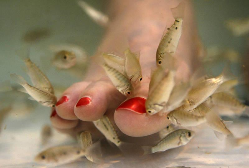 中國一名女子到泰國旅遊做魚療,在魚池裡隨意小便,害死整池小魚。圖為魚療示意圖。(美聯社)