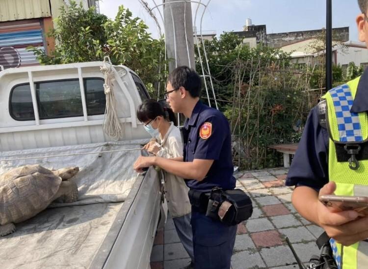 名為「閃電腿」的象龜被撿到的民眾載到派出所歸還。(記者顏宏駿翻攝)