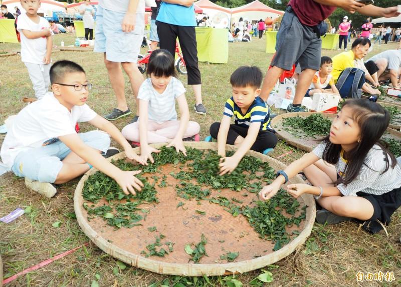 本屆南投茶博最後一場千人活動〞千人揉茶〞,有的小朋友多人一起使勁地揉茶菁。(記者陳鳳麗攝)