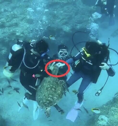 潛水客涉嫌餵食海龜。(記者葉永騫翻攝)