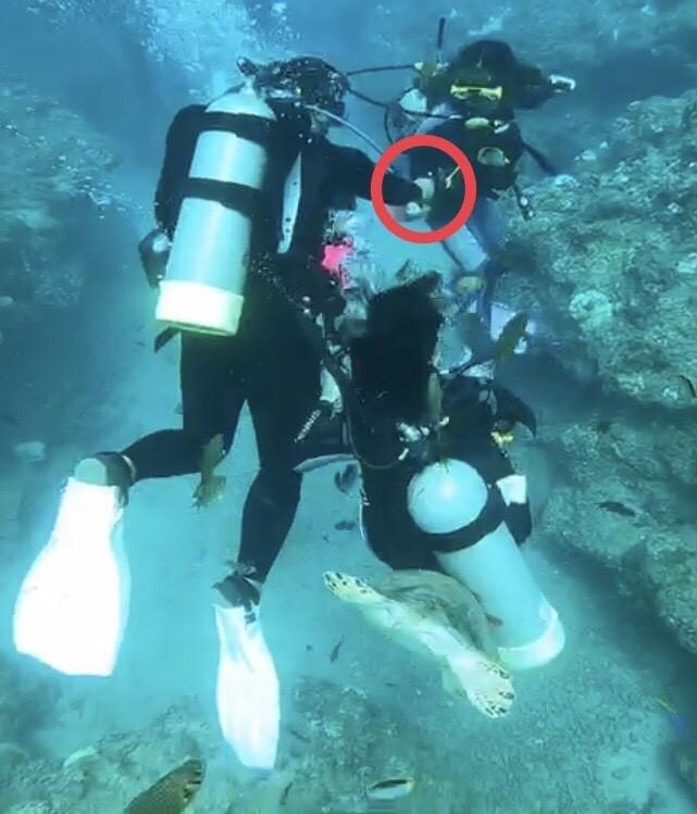 潛水客涉嫌拿食物在餵食海龜。(記者葉永騫翻攝)