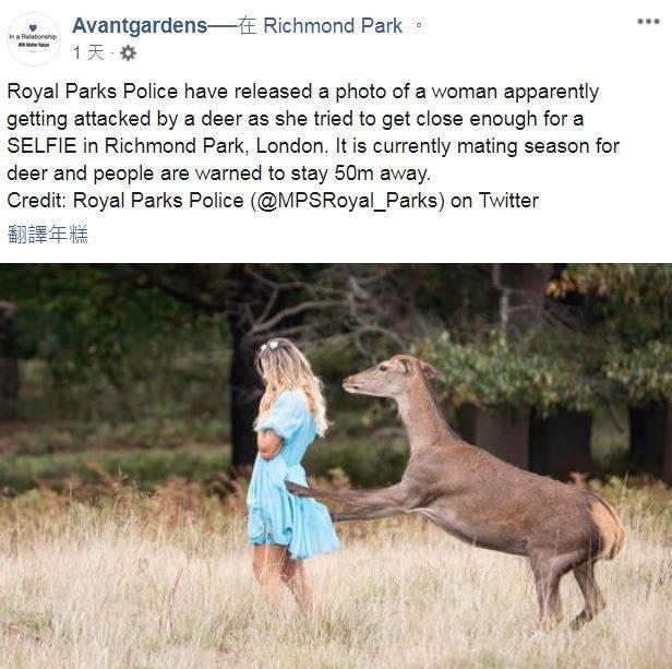 英國正妹在倫敦里奇蒙公園餵鹿,由於太靠近鹿隻差點出現被「老漢推車」的狀況。(圖擷自Avantgardens臉書)