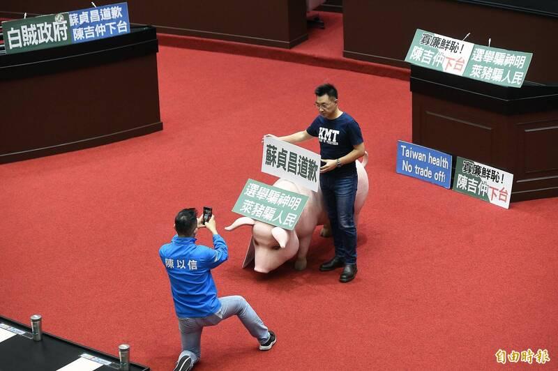 立法院國民黨團持續杯葛行政院長蘇貞昌施政報告,被用來抗議美豬進口的道具豬在議場內成為國民黨籍立委合影焦點。(資料照,記者朱沛雄攝)