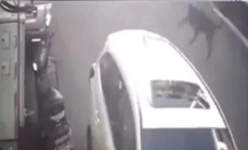 黑狗從6樓墜樓,砸到路旁汽車車頂後彈開。(新竹市浪愛傳遞貓狗tnvr協會提供)