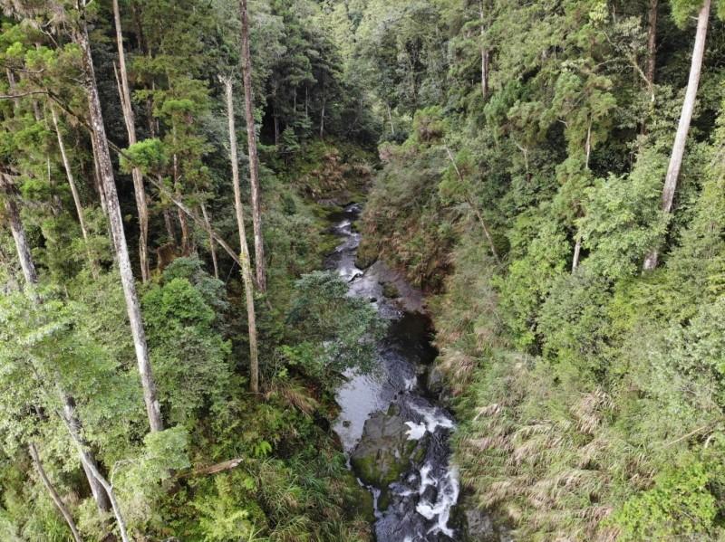 水漾森林新河道兩岸為堅硬岩壁,20年來未有侵蝕情形。(嘉義林管處提供)